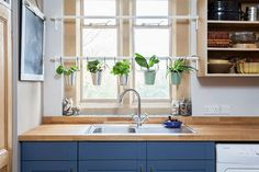 Space is never a constraint for a small herb garden in the kitchen [From: Chris Snook Photography]