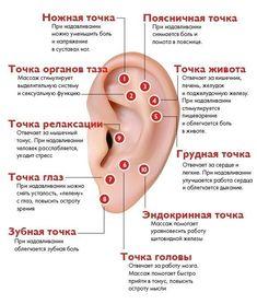 Ear Reflexology, Reflexology Points, Spine Health, Medical Advice, Alternative Medicine, Natural Medicine, Body Care, Health And Beauty, Health Tips