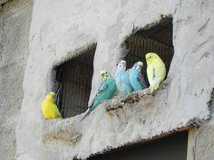 Parakeets at Southwick Zoo