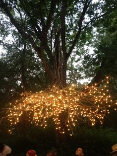 a chandelier of branches