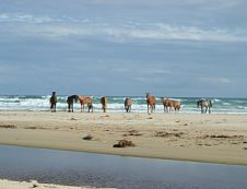 Oyster Bay Lodge: Beach Horse Riding lodge in South Africa. Bay Lodge, Landscape Borders, Kwazulu Natal, St Francis, Sunshine Coast, Horse Riding, Where To Go, Animal Kingdom, South Africa