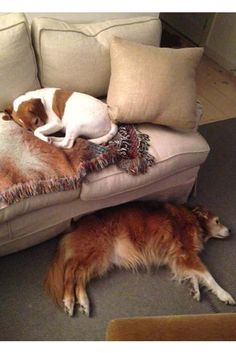 Isaac Mizrahi's dogs, Harry and Dean. [Photo Courtesy of Isaac Mizrahi]