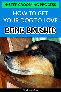How To Deal With Aggressive Dog Behavior Problems - Dog Health Care and Information Puppy Training Tips, Training Your Dog, Training Pads, Training School, Training Schedule, Training Collar, Potty Training, Chihuahua, Dog Grooming Tips