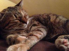 Che sonno !!