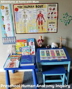 Building a Body - Preschool Anatomy