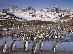A ilha de Geórgia do Sul, no Atlântico, é lar de pinguins e elefantes-marinhos. Don Paulon, que esteve lá em 2007, diz que a pequena ilha gelada é um sonho para qualquer fotógrafo da vida selvagem