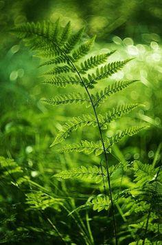 Farn... Green | Grün | Verde | Grøn | Groen | 緑 | Emerald | Colour | Texture | Style | Form | Fern