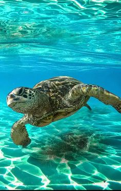 Turtle discovered by Aaliyah Kinniburgh on We Heart It Save The Sea Turtles, Baby Sea Turtles, Cute Turtles, Ocean Turtle, Turtle Love, Sea Turtle Art, Underwater Creatures, Ocean Creatures, Sea Turtle Pictures