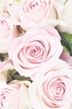 a whisper of roses Cute Backgrounds, Cute Wallpapers, Beautiful Roses, Simply Beautiful, My Flower, Pretty Flowers, Couleur Rose Pastel, Floral Rosa, Purple Roses