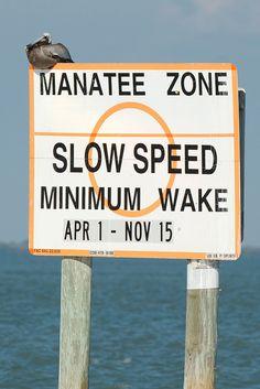 Sanibel and Captiva Signs - Manatee Zone by pmarkham, via Flickr