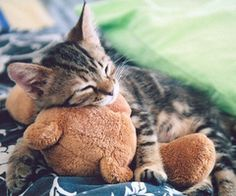 Kitty cuddling with Teddy bear Baby Animals, Funny Animals, Cute Animals, Funny Dogs, Cute Kittens, Cats And Kittens, I Love Cats, Crazy Cats, Gatos Cats