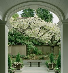 Terrace off porch architect, garden ideas, privacy fences, flowering trees, patio, backyard, courtyard, fence design, blossom