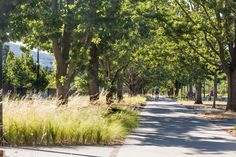 Constitution Avenue, Canberra, by Jane Irwin Landscape Architecture « Landscape Architecture Works | Landezine