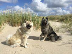 Dea & Cleo vom Schmetterlingsgarten, Sylt, north sea