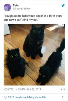 It's the spookiest time of the year! Funny Animal Memes, Cute Funny Animals, Cute Baby Animals, Cat Memes, Funny Cute, Animals And Pets, Cute Cats, Funny Humor, Funny Stuff