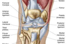 The Illustrated Guide to What's Causing Your Knee Pain: Step 1 of 5 - Normal Joint (Knee)