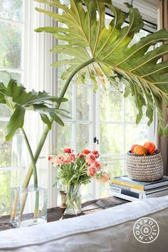 I love to cut Philodendron leaves off the plant and arrange them in a vase. They can last for about 7 weeks if you freshen the water.