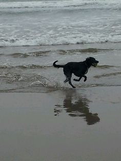 molly playing in sea