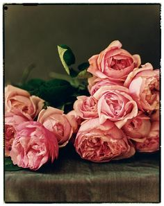 David Austin roses ... simply beautiful!  The best roses!