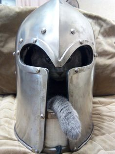 Sir McKitty The Brave