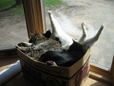 There is always box for one more cat!