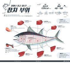 알고 먹어야 맛있는 참치 부위별 특징 [인포그래픽]   비주얼다이브 Food Design, E Design, Healthy Menu, My Life Style, Information Design, Wine And Beer, Food Illustrations, Korean Food, Fun Drinks