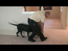 Trace the Mold Sniffing Dog - Orange County Real Estate - YouTube -