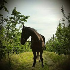 From Charlotte, Ashford  | The Jacksons BIG Equestrian Picture Competition #horse #equestrian #countryside