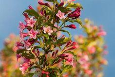Hibiskus w ogrodzie przycinanie, rozmnażanie i zimowanie Dom, Plants, Hibiscus, Compost, Plant, Planets