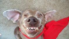 Sorriso Colgate