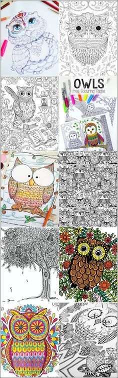 10 Printable Owl Coloring Pages For Adults (My Owl Barn)