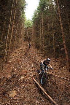 Wykeham Downhill