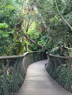 Tree top canopy walk at Kirstenbosch botanical gardens.
