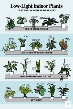 House Plants Decor, Garden Plants, Backyard Plants, Indoor Gardening, Plants In The House, Good Indoor Plants, Indoor House Plants, Indoor Plant Decor, Indoor Cactus Plants