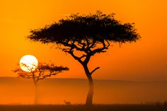 When taking a photo into the sun, Golden Hour provides an excellent time to get beautiful silhouettes. That concept is on full display in this photo by Kurt. Not only do the trees provide interesting shapes, but the inclusion of the shadowy figure of the animal and the 400mm point of view to make the sun appear very large makes this one impressive shot.