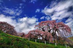https://www.facebook.com/midoriphoto/photos/a.179719125453667.42833.179702795455300/810271612398412/?type=1