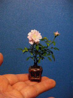 me gusta este mini rosal