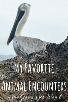 My Favorite Animal Encounters in the Galapagos Islands