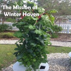 The Mission of Winter Haven