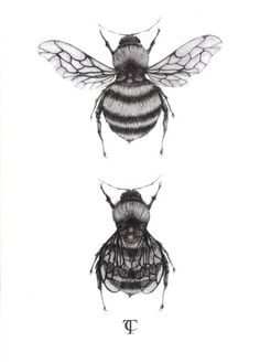 Bee Illustration - A4 fine art print. $35.00, via Etsy.  Love the top image