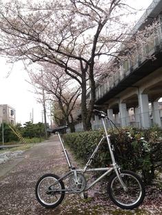 ©じゃまけんさま / オールドダホン / 昨日までの荒天後に撮影しましたので散りゆく桜とともに・・となってしまいました。古いですが大好きなオールドダホンです、近所をゆっくり走るときの相棒です。