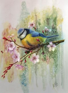 Blue Tit and Plum Blossoms Art Print by John F Willis. All prints are professionally printed, packaged, and shipped within 3 - 4 business days. Choose from multiple sizes and hundreds of frame and mat options. Art Watercolor, Bird Pictures, Vintage Birds, Bird Art, Bird Skull, Beautiful Birds, All Art, Fine Art America, Art Prints