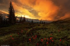 Hart's Pass, North Cascades by Vinny Pickens on 500px