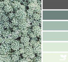 { succulent tones } image via: @suertj