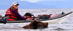 Forget about sharks, in Alaska kayakers have to keep an eye on the bears: A kayaker watches a brown bear swimming in Anton Larsen Bay near Kodiak, Alaska, Kayak Paddle, Canoe And Kayak, Kayak Fishing, Sea Kayak, Canoe Boat, Alaska Fishing, Fishing Tips, Kayaks, Weekender