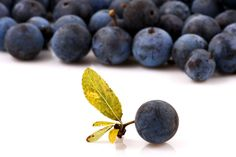 This bite size Patagonian berry has one of the highest antioxidant values of all fruits on earth. Learn about how this can benefit you within. - The Holistic Ingredient.