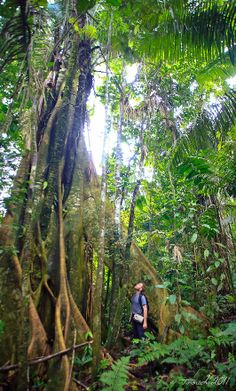 Amazon rainforest (no location specifed) | Scenes of Time photography