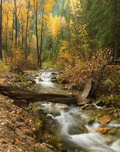 north idaho forest scenery - Google Search
