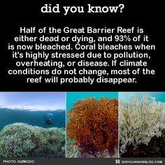 Half of the Great Barrier Reef is either dead or dying, and of it is now bleached. Coral bleaches when it's highly stressed due to pollution, overheating, or disease. If climate conditions do not change, most of the reef will probably disappear. Save Planet Earth, Save Our Earth, Save The Planet, The More You Know, Good To Know, Did You Know, Save Our Oceans, World Problems, Marine Biology