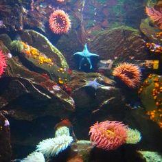 @ Vancouver aquarium